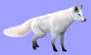 arctic-fox-furred-HDR